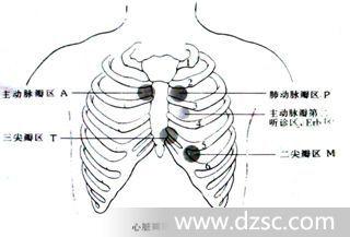 心脏瓣膜听诊区